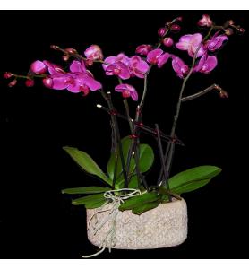 Coupe d'orchidée