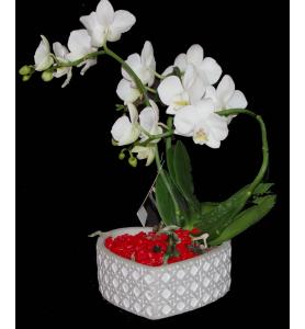coupe d'orchidée blanche