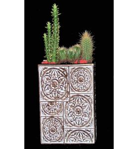coupe de cactus