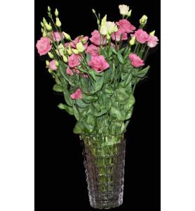 Lisianthus blanc, rose et...