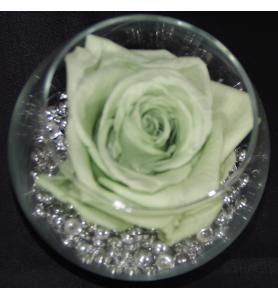 Rose stabilisé